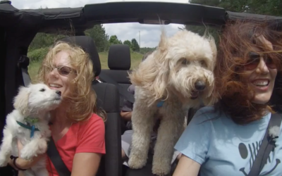 Jeep Hair We Care – Going to the Dogs